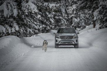 loki-the-wolfdog-and-2017-gls